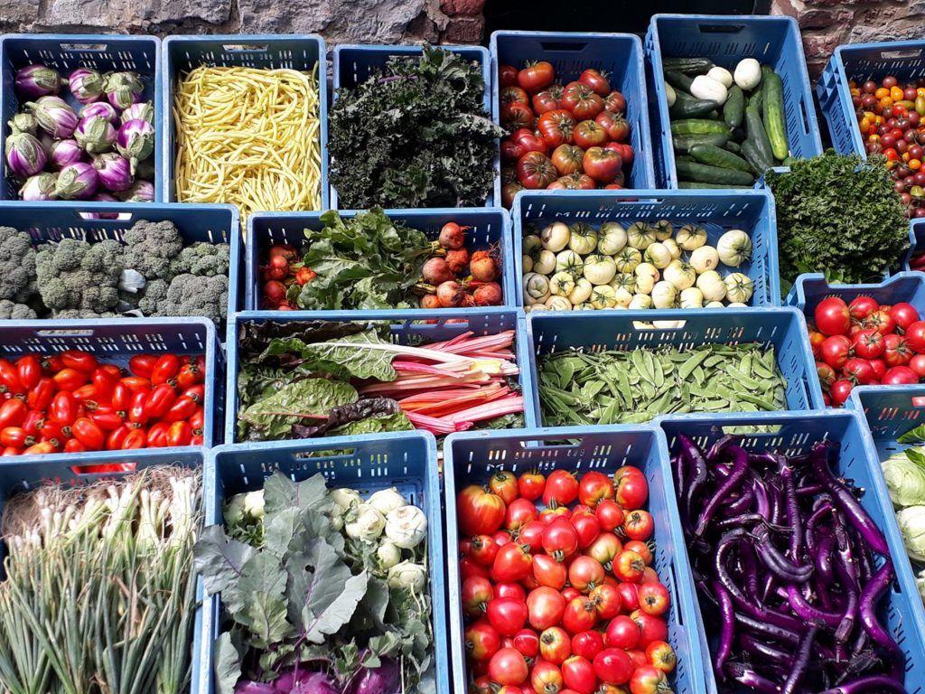 Auto-cueillette de légumes !